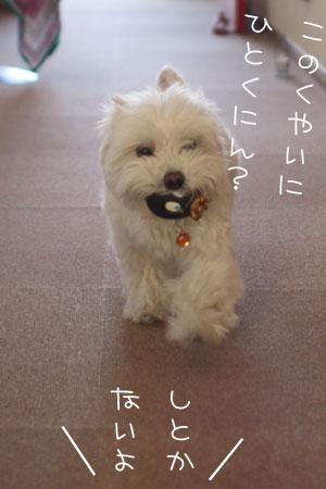 3_26_4371.jpg
