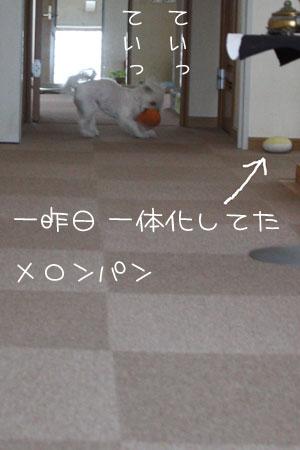 3_7_8499.jpg