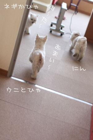 3_9_3257.jpg