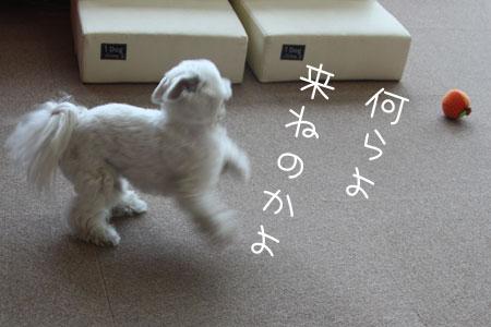 4_10_4921.jpg