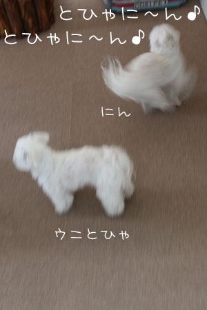 4_10_4953.jpg