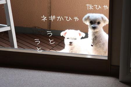 4_10_4989.jpg