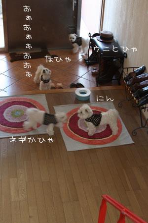 4_11_5043.jpg