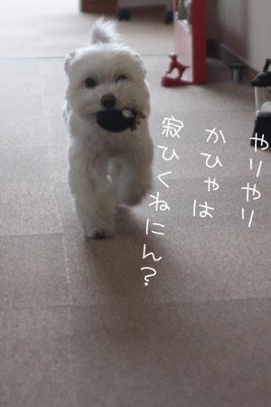 4_15_5863.jpg