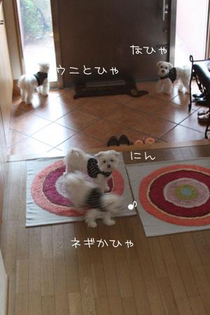 4_17_6250.jpg