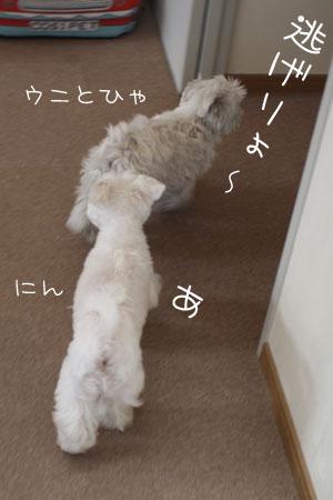 4_18_6035.jpg