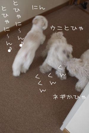4_19_6097.jpg