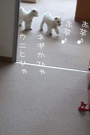 4_20_6296.jpg