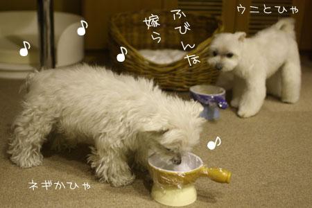 4_21_6264.jpg