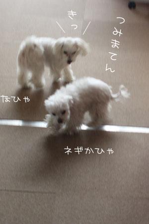4_22_6294.jpg