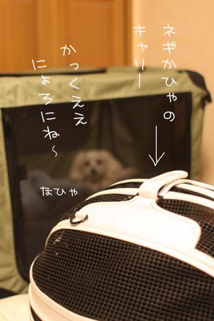 4_23_6420.jpg
