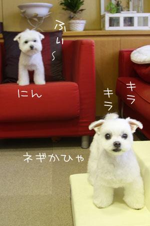 4_23_6541.jpg