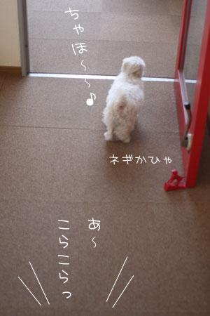 4_24_6533.jpg