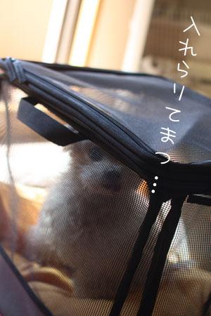 4_24_6558.jpg