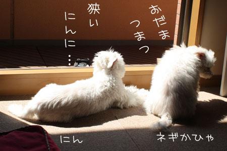 4_28_6778.jpg