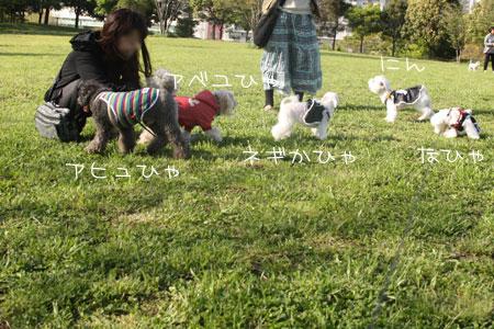 4_29_7159.jpg