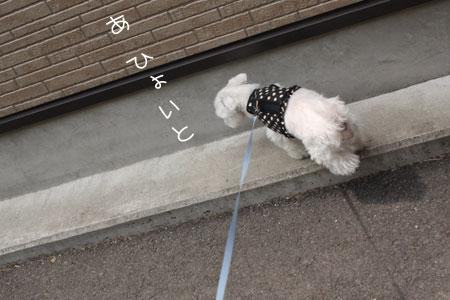 4_30_6907.jpg
