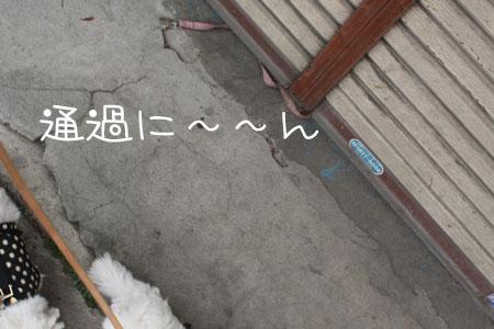 4_30_7031.jpg