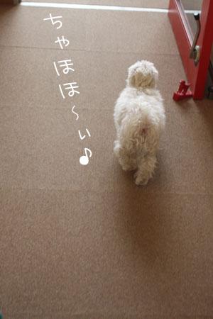 4_30_7034.jpg