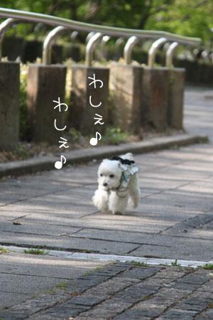 4_30_7330.jpg