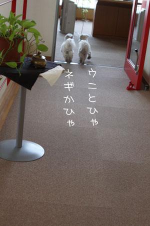 4_3_3944.jpg