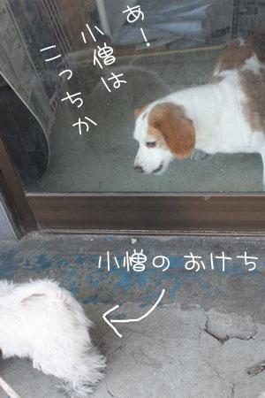 4_5_5286.jpg