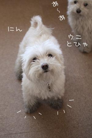 4_6_5409.jpg