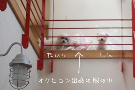 5_13_8442.jpg