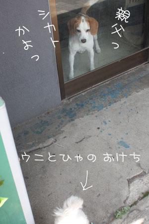 5_14_8588.jpg