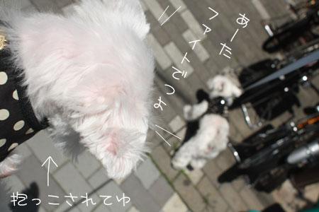 5_14_8619.jpg