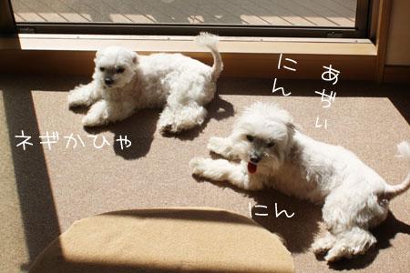 5_16_9341.jpg