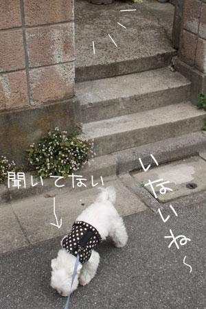 5_17_8899.jpg