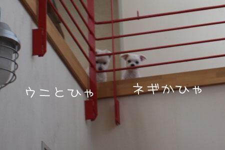 5_17_8942.jpg