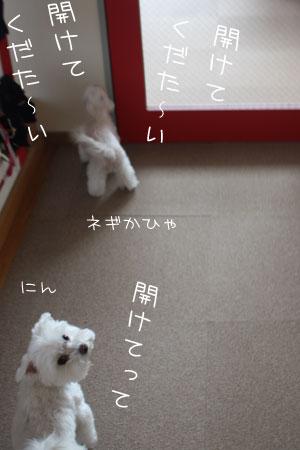 5_17_9037.jpg