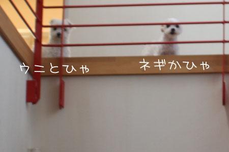 5_24_9617.jpg