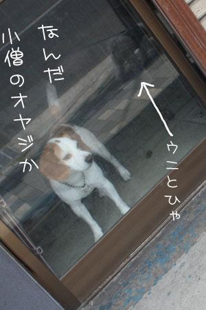 5_9_8048.jpg