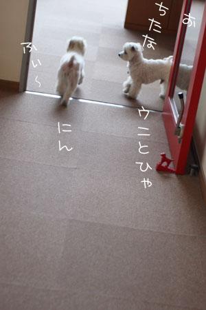 5_9_8737.jpg