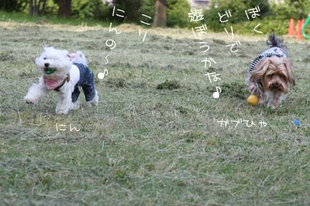 6_10_4152.jpg