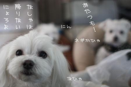 6_15_1559.jpg