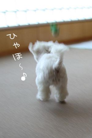 6_16_4807.jpg