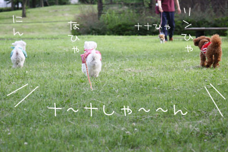 6_19_5186.jpg