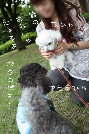 6_19_5217.jpg