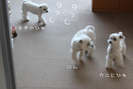 6_5_3109.jpg