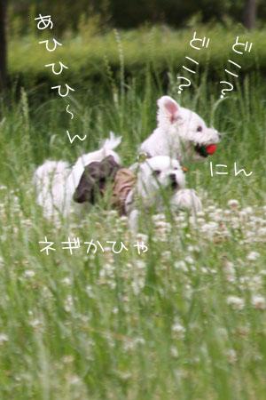 6_7_3860.jpg