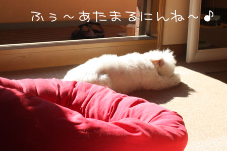 7_11_2687.jpg