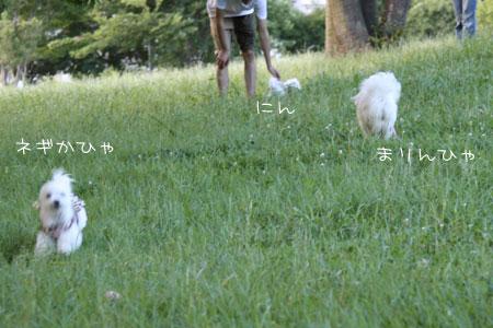 7_15_8119.jpg