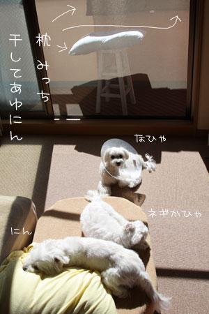 7_18_8288.jpg