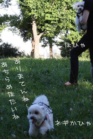 7_18_8340.jpg