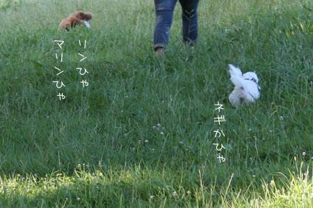 7_18_8370.jpg