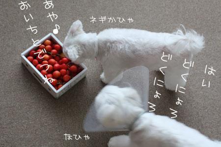 7_1_6599.jpg